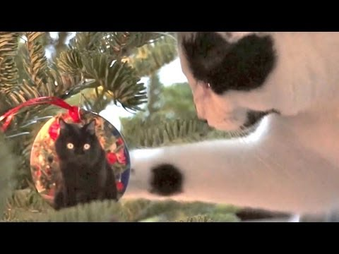 I'm Climbing Up The Christmas Tree Neow! (2012 version)