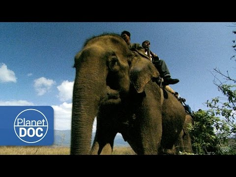 Elephants in India | Nature - Planet Doc Full Documentaries