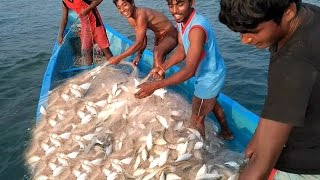 видео Sea Fish