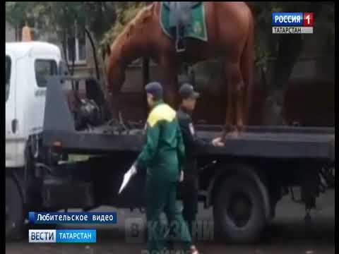 Соцсети: в Казани эвакуировали припаркованную лошадь