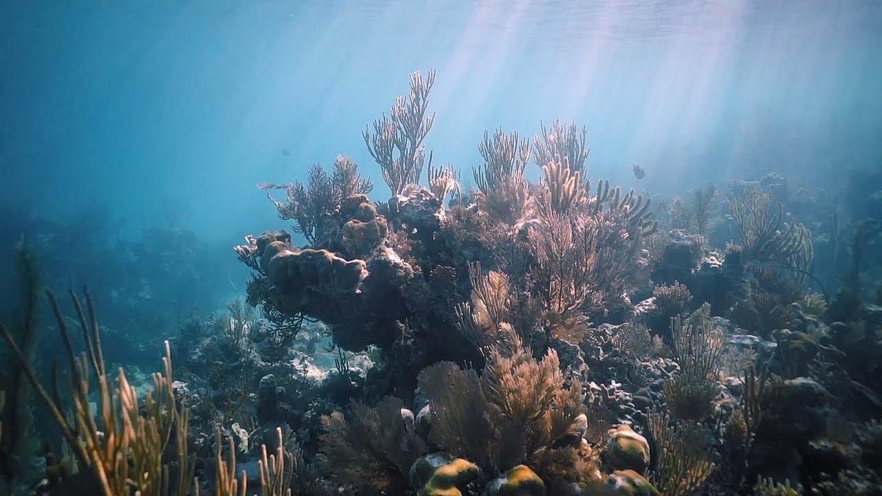 Des récifs coralliens artificiels dans les calanques de Marseille