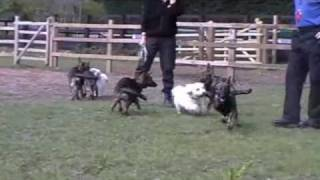Police Dog Action Chase: The New Recruits (puppies) Meet The Press