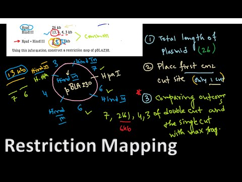 Restriction mapping tutorial 1 | restriction mapping problems for ...