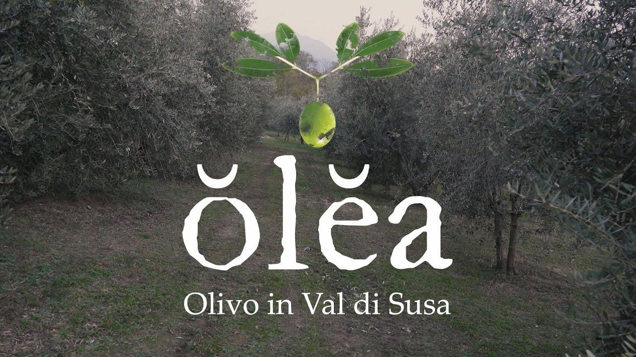 olea: olivo in Val di Susa. Il trailer