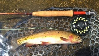 Fly Fishing for Cutthroat Trout in Colorado