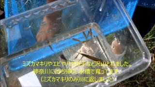 2013.9.14 長野県上田市内村川にて魚とり