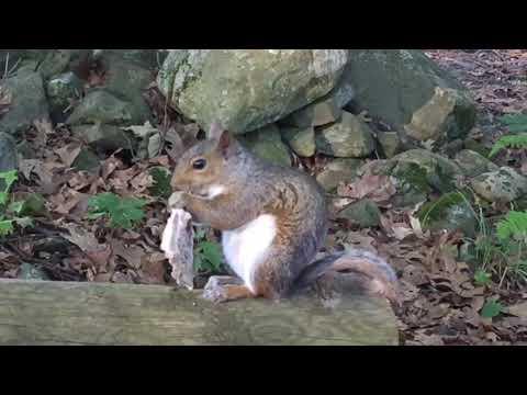 Squirrels chew bones for calcium!