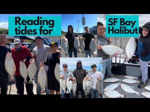 How To Read The Tides To Improve Your Catch Rates For Halibut In The SF BAY!