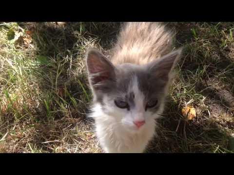 Обработка котёнка от блох