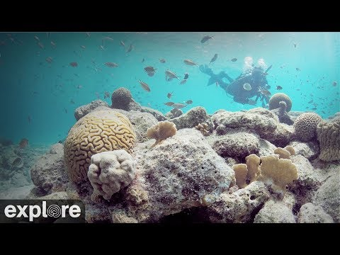 Bonaire Underwater Coral Cam powered by EXPLORE.org