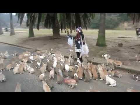 Ugandan Knuckles tribes warriors - Documentary footage