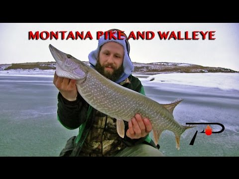 Ice Fishing Montana's Tiber Lake