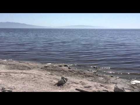 Biggest Lake in California - Salton Sea