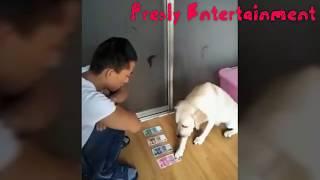 Mengagumkan Anjing Ini Pintar Sekali Dan Nurut Sama Majikannya