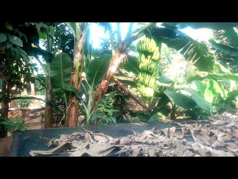 Snail farming  business    FARMER  IYKE