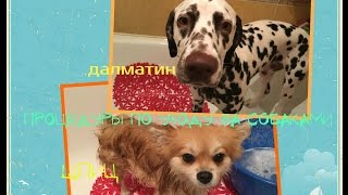Уходовые процедуры за собаками(Купание,стрижка когтей,обработка от клещей)