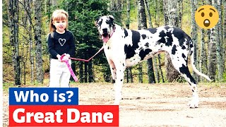 Great Dane Dog Breed Information and Characteristics (Shocking Facts Revealed )