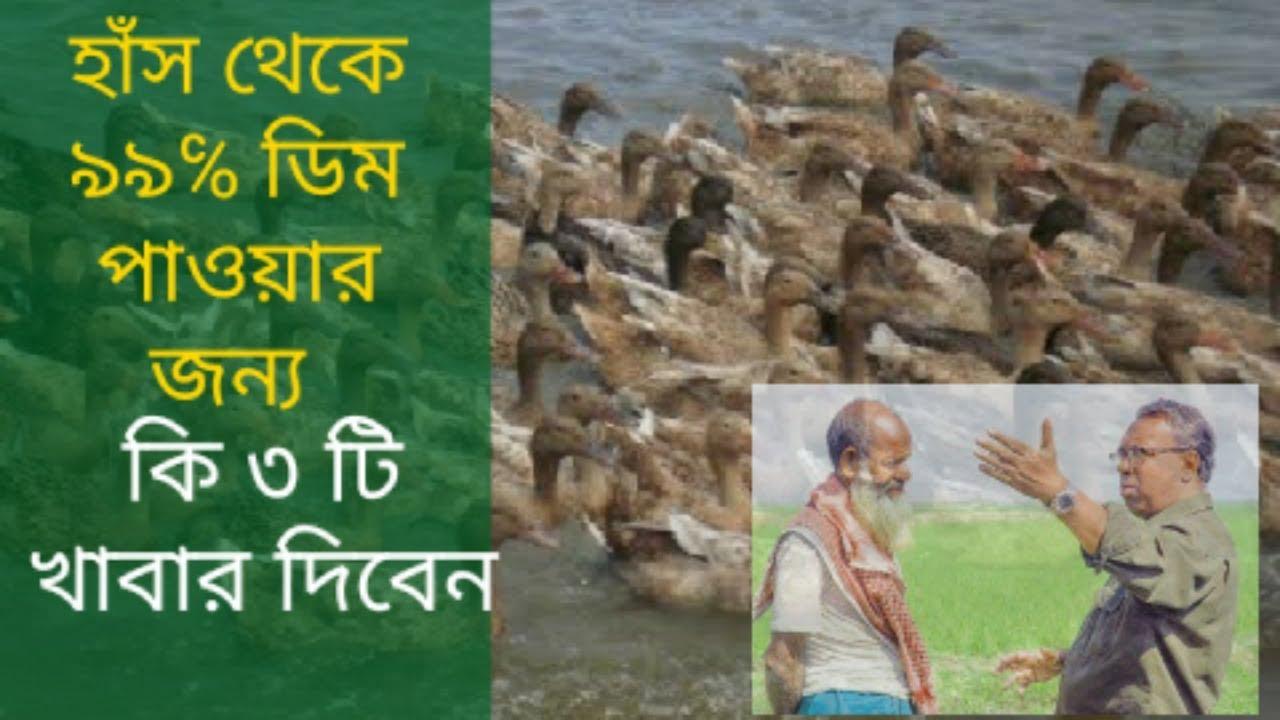 Download হাঁস থেকে ৯৯% ডিম পাওয়া জন্য কোন ৩টি খাবার দিবেন|has palon |Duck farming in bangladesh|haser khamar