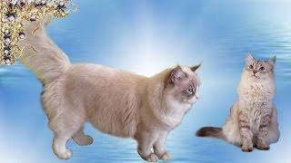 Загадочные Кошки. Всё самое интересное о них. #Василёк&Умка