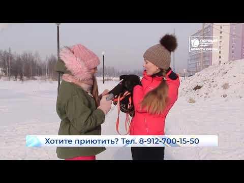 Пристроим вместе  Новости Кирова  26 02 2020