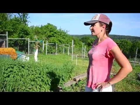 Дела огородные на Кубани.