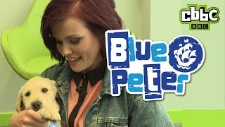 CBBC: Meet Blue Peter puppy Iggy!