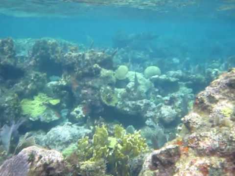 bahamas coral reef