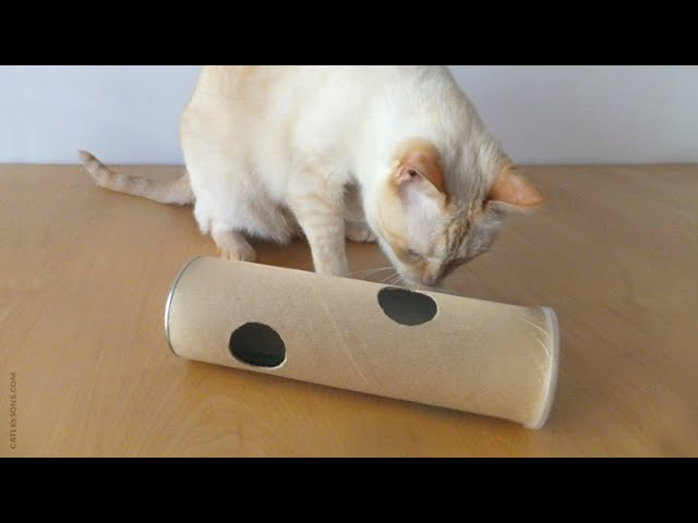 How to Make a Puzzle Tube Toy for your Cat