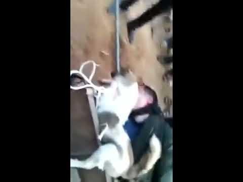 """Thêm 2 tên """"cẩu tặc"""" bị dân làng đánh chết trưa ngày 17/4/2015 tại Phú Thọ!"""