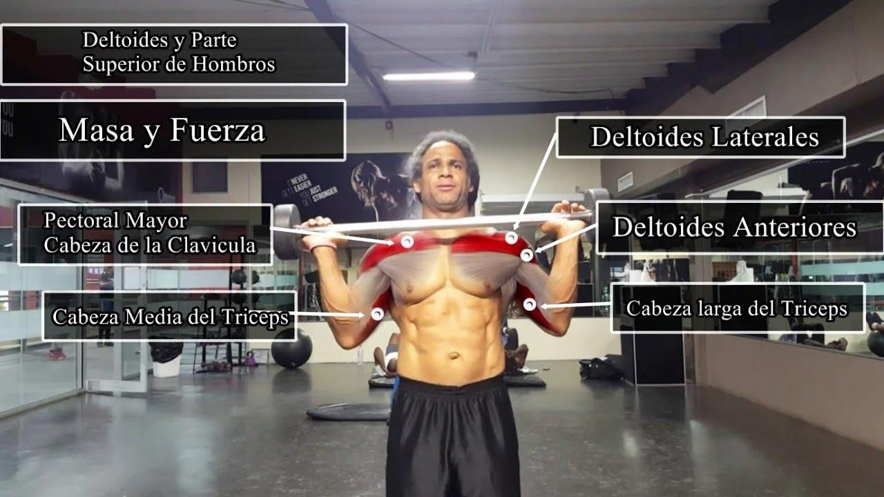 Anatomía del ejercicio/Rutina de hombros ¿No te crecen los hombros ...