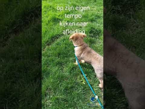 wandelen met pup