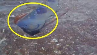 5 mysteriöse Seeungeheuer   auf Kamera festgehalten