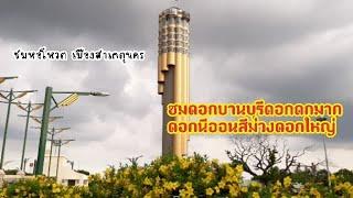 ชมดอกบานบุรี ดอกนีออน และหอโหวตจังหวัดร้อยเอ็ด ที่บึงพลาญชัย Roi et Tower