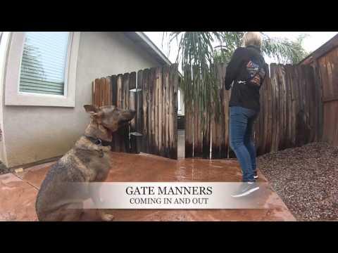 5 Y/O Bull Terrier/Shepherd Mix