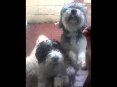 Dogs Scratching The Door