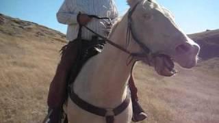 Equine.wmv