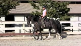 Tennessee Walking Horse- Flat Walk, Running Walk, Rack, Canter, Slow Motion