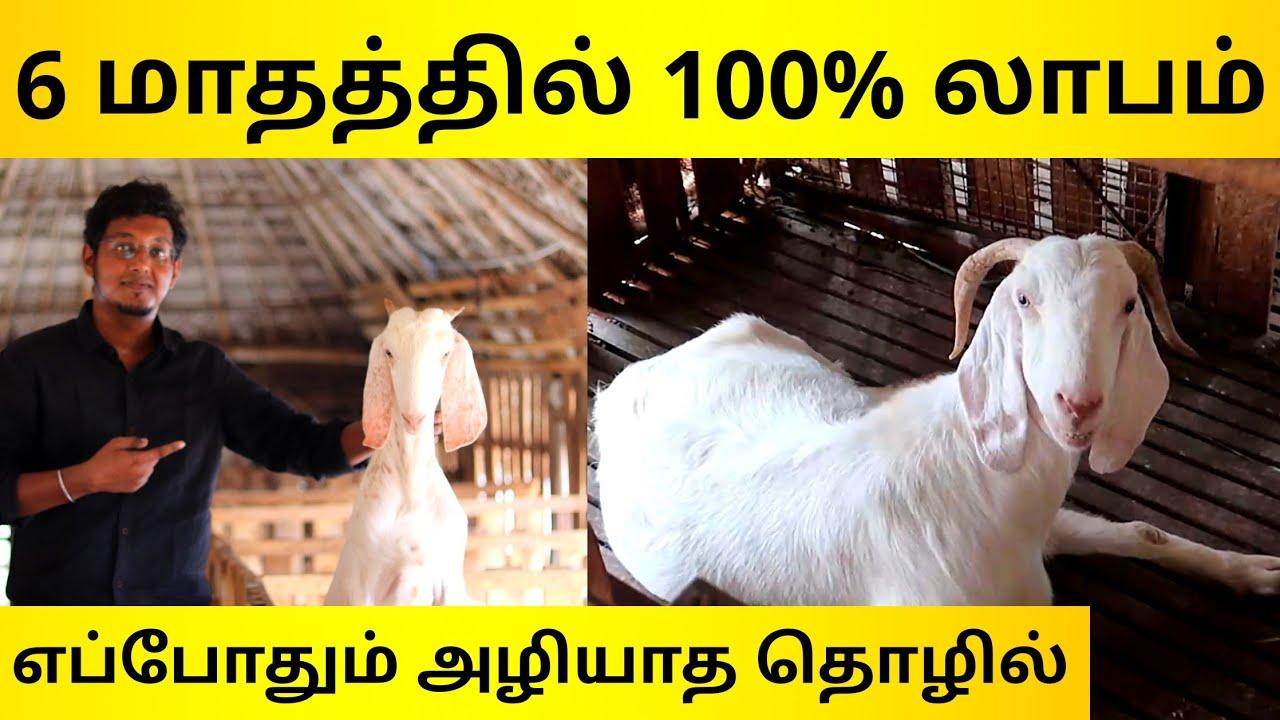 12,000 முதலீட்டில் 100% லாபம் | வீட்டிலேயே தொடங்கலாம் | Business Ideas In Tamil | Goat Farming