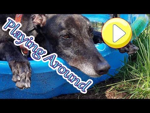 Adopting a Greyhound | Greyhounds love to have fun! 😄