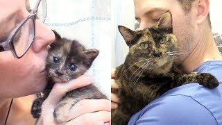 meet-jugg-the-neediest-kitten-ever