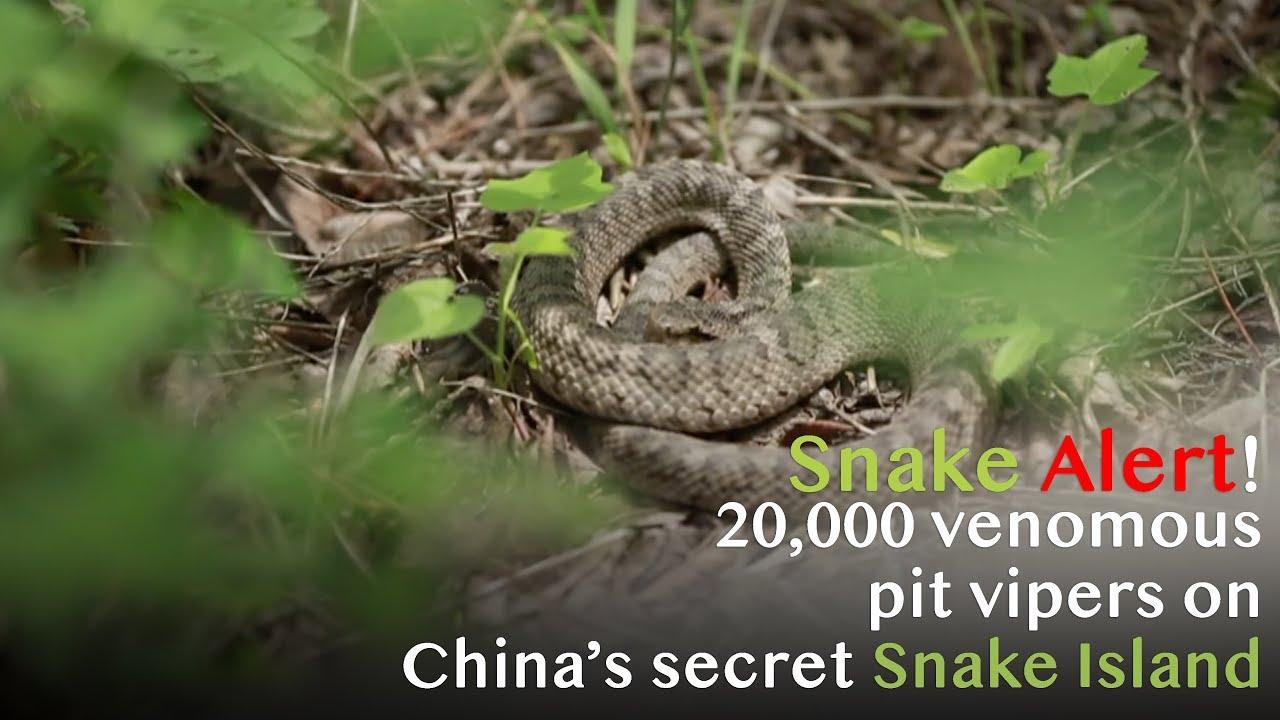 13b92f939e Snake Alert! 20