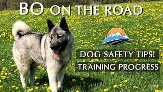Bo's Training Progress and Dog Safety in an RV | Interior RV Temp Test