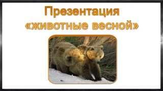 Презентация животные весной. Презентация для 1, 2 и 3 класса