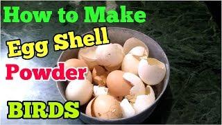 HOW TO MAKE EGG SHELL POWDER FOR BUDGIES BIRDS