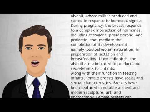 Breast - Wiki Videos