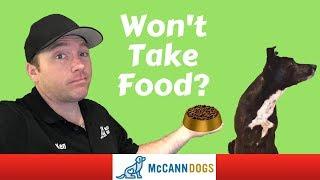 Training A Dog Who Doesn't Like Treats