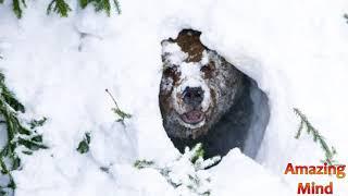 Почему Медведь спит в Берлоге?