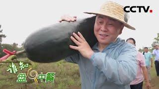 《谁知盘中餐》 20200427 儋州黑冬瓜 大行其道|CCTV农业