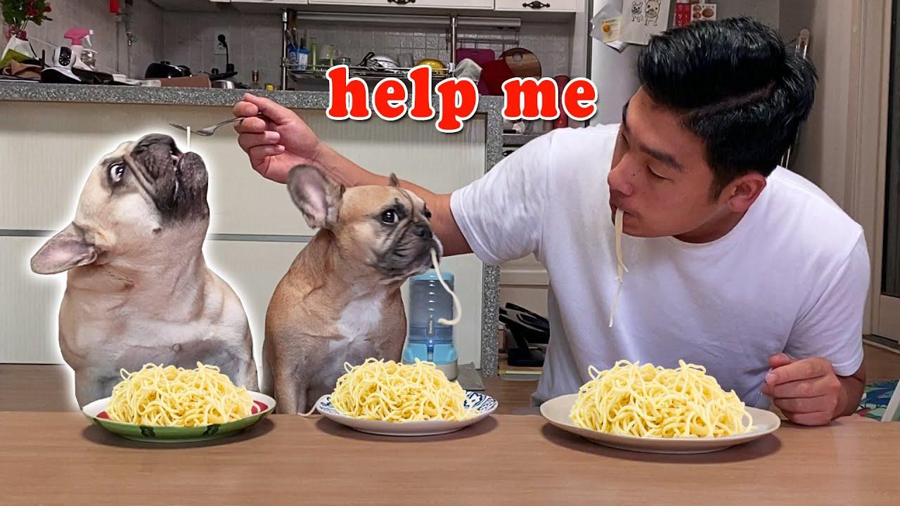 Spaghetti Eating Contest: French Bulldogs VS Human 😂 WHO WILL WIN?