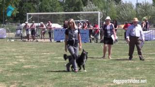 Selection - Valentina Balli + Mind the Dog Lycan / Border Collie